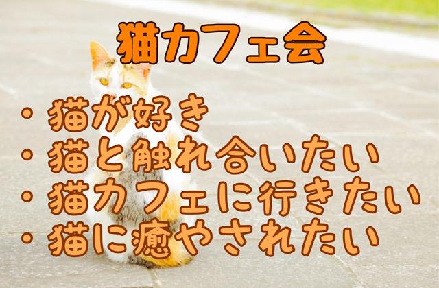 福岡猫好き